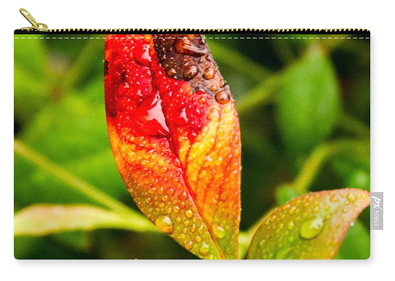 Rain Carry-all Pouch featuring the photograph Rain Drops On Colorful Leaf by Douglas Barnett