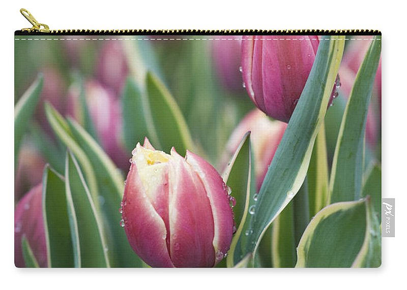 Bloom Carry-all Pouch featuring the photograph Rain Drops On Tulips by Juli Scalzi