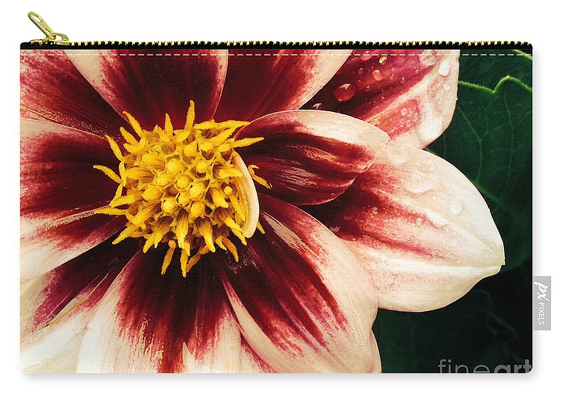 Flora Carry-all Pouch featuring the photograph Rain Kissed Morning by Jacklyn Duryea Fraizer