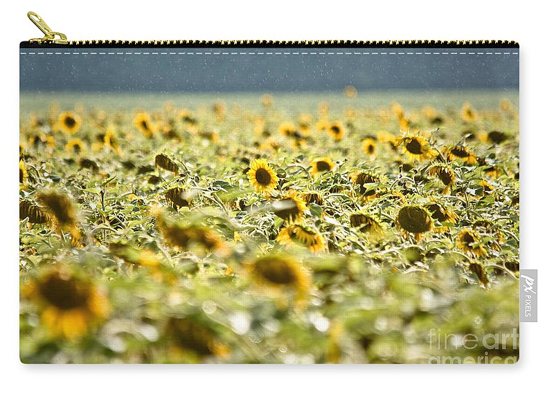 Sunflowers Carry-all Pouch featuring the photograph Rain On The Sunflowers by Cheryl Baxter