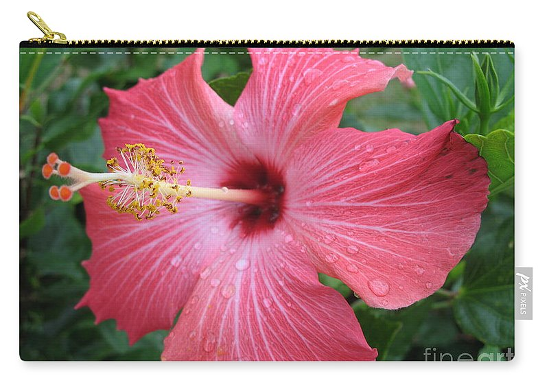 Hibiscus Carry-all Pouch featuring the photograph Rain Soaked Hibiscus by Christiane Schulze Art And Photography