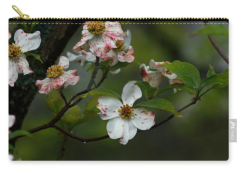 Dogwood Carry-all Pouch featuring the photograph Rainy Day Dogwood by Douglas Stucky