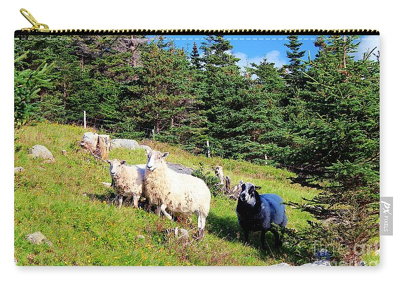 Ram And Ewes Carry-all Pouch featuring the photograph Ram And Ewes by Barbara Griffin