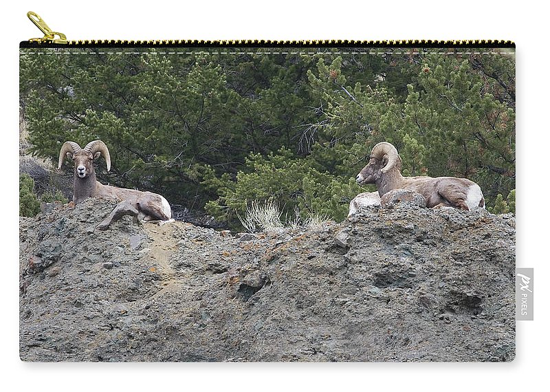 Rocky Mountain Bighorn Sheep Carry-all Pouch featuring the photograph Ram Tough by Rich Franco