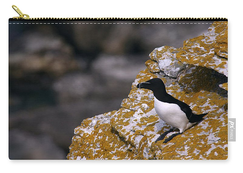 Alvinge Carry-all Pouch featuring the photograph Razorbill Bird by Dreamland Media