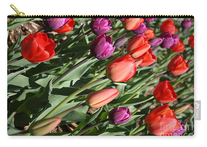 Tulips Carry-all Pouch featuring the photograph Red And Purple Tulips by Dora Sofia Caputo Photographic Design and Fine Art