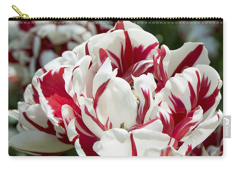 Spring Carry-all Pouch featuring the photograph Red And White 6393 by Terri Winkler