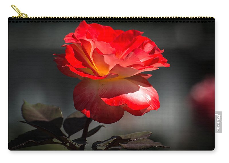 Rose Carry-all Pouch featuring the photograph Red And White Rose by Michael Moriarty