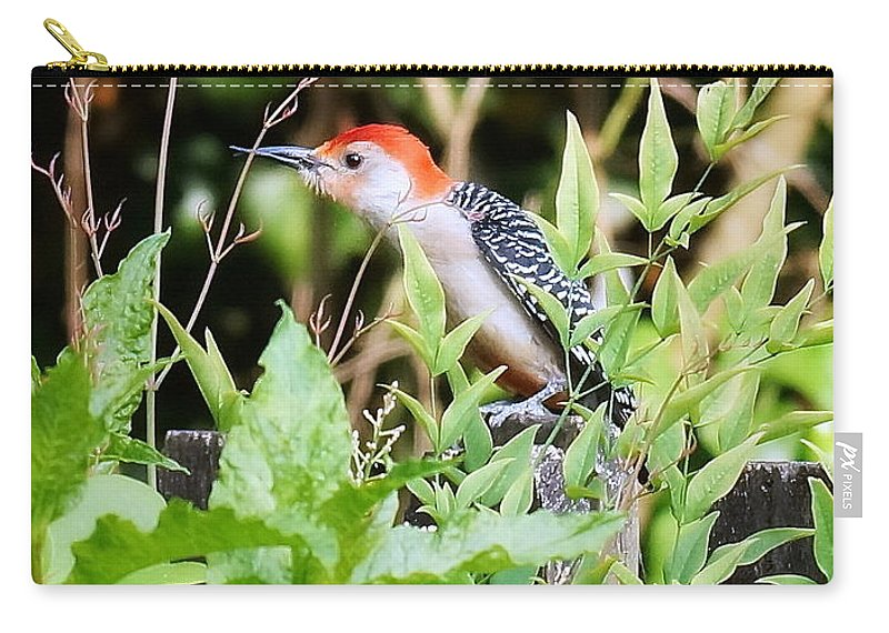 Woodpecker Carry-all Pouch featuring the photograph Red Bellied Woodpecker by Paul Wilford