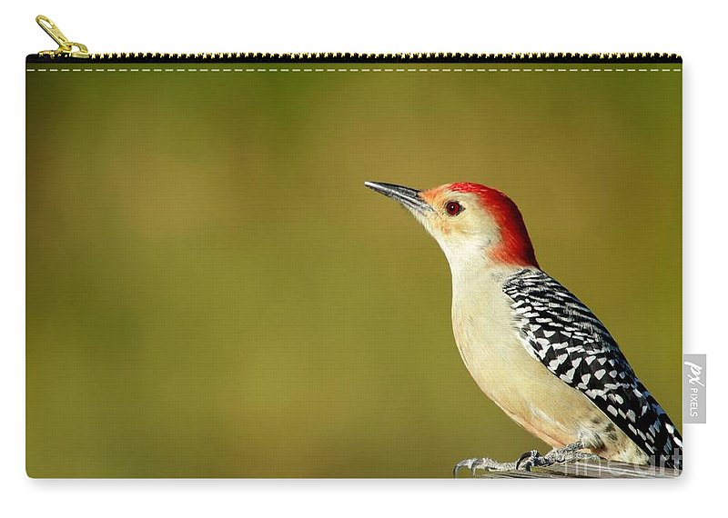 American Carry-all Pouch featuring the photograph Red Bellied Woodpecker by Sabrina L Ryan