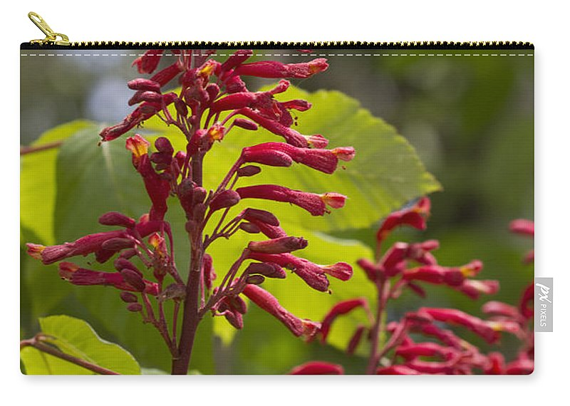 Aesculus Pavia Carry-all Pouch featuring the photograph Red Buckeye - Aesculus Pavia - Wildflowers by Kathy Clark