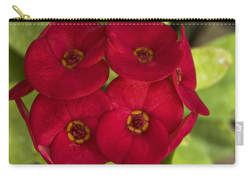 Lovejoy Carry-all Pouch featuring the photograph Red Burst by Lovejoy Creations