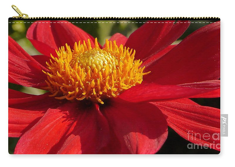 Dahlia Carry-all Pouch featuring the photograph Red Dahlia Starlet by Christiane Schulze Art And Photography