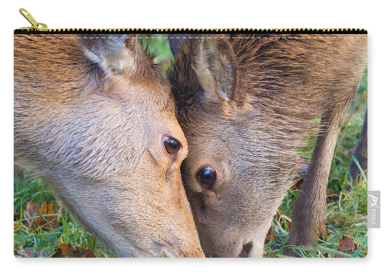 Red Deer Carry-all Pouch featuring the photograph Red Deer Cervus Elaphus Head To Head by Liz Leyden