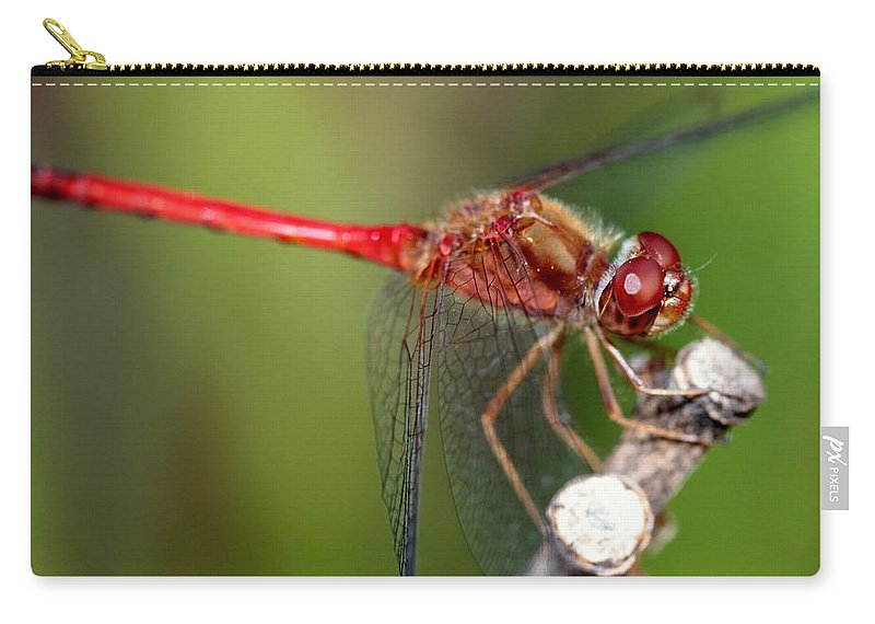 Dragonfly Carry-all Pouch featuring the photograph Red Dragon by Kenny Glotfelty