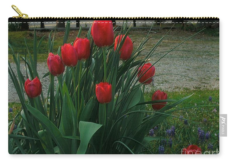 Red Dynasty Red Tulips Carry-all Pouch featuring the photograph Red Dynasty Red Tulips by Kip DeVore
