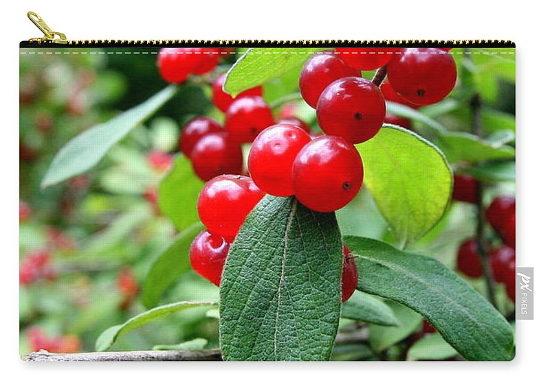 Red Berries Carry-all Pouch featuring the photograph Red Flare by Neal Eslinger