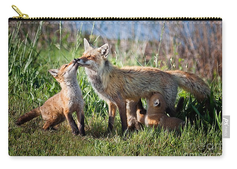 Award Winning Carry-all Pouch featuring the photograph Red Fox Family by Ronald Lutz