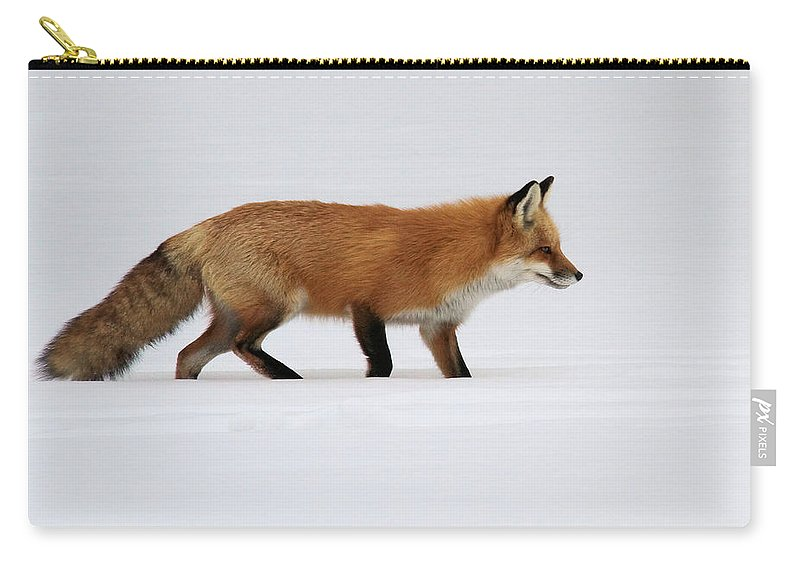 Red Fox Carry-all Pouch featuring the photograph Red Fox In Deep Snow by Doris Potter