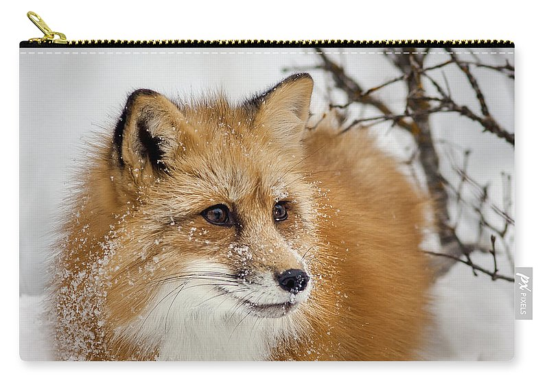 Red Fox Carry-all Pouch featuring the photograph Red Fox In Snow by Jack Bell
