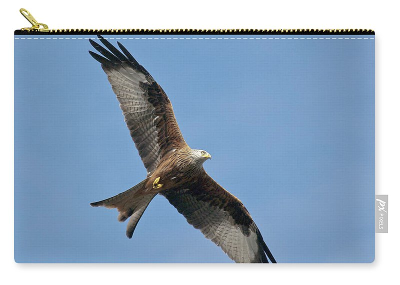 Red Kite Carry-all Pouch featuring the photograph Red Kite In Flight by Gary Eason