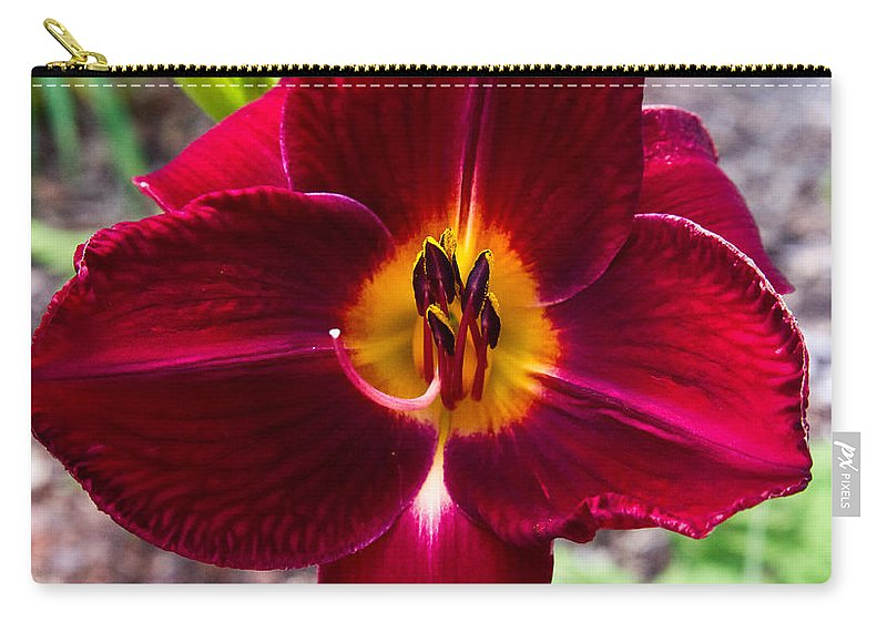 Redlady Carry-all Pouch featuring the photograph Red Lady Lily 4 by Douglas Barnett