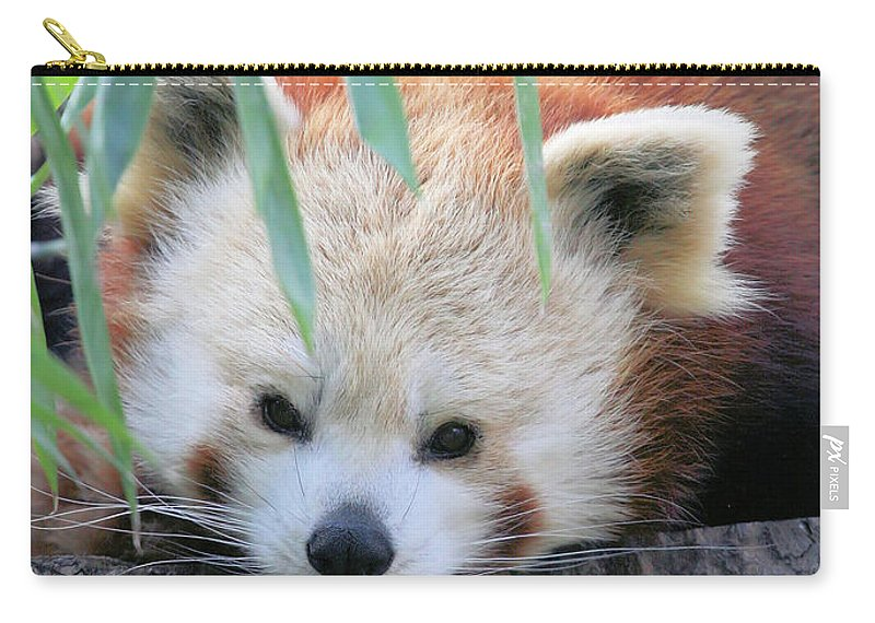 Red Panda Carry-all Pouch featuring the photograph Red Panda by Karol Livote
