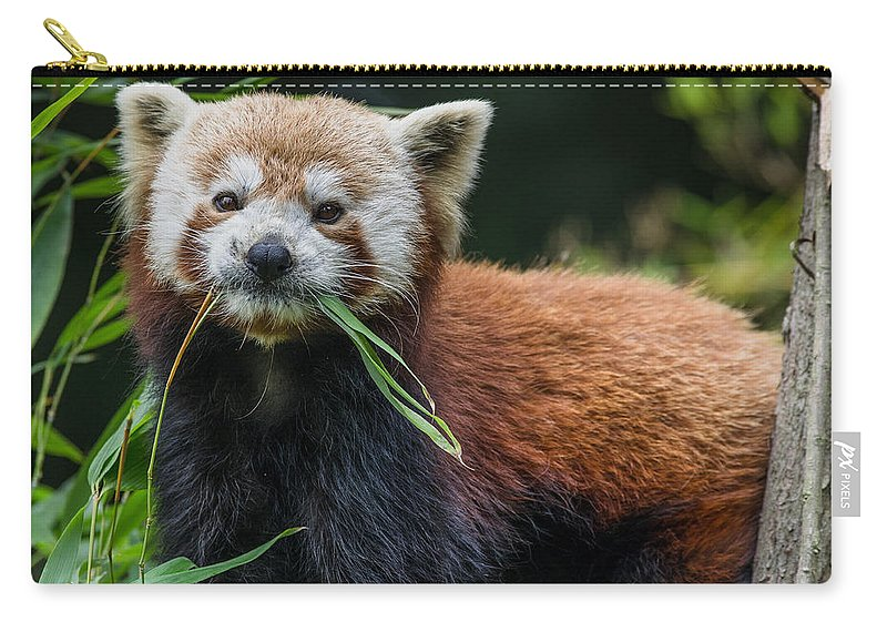 Red Panda Carry-all Pouch featuring the photograph Red Panda With An Attitude by Greg Nyquist