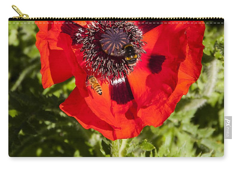Botanical Gardens Christchurch New Zealand Red Poppy Poppies Bee Bees Flower Flowers Bloom Blooms Carry-all Pouch featuring the photograph Red Poppy And Bee by Bob Phillips