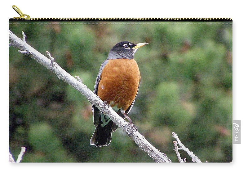 Robin Carry-all Pouch featuring the photograph Red Robin II by Tikvah's Hope