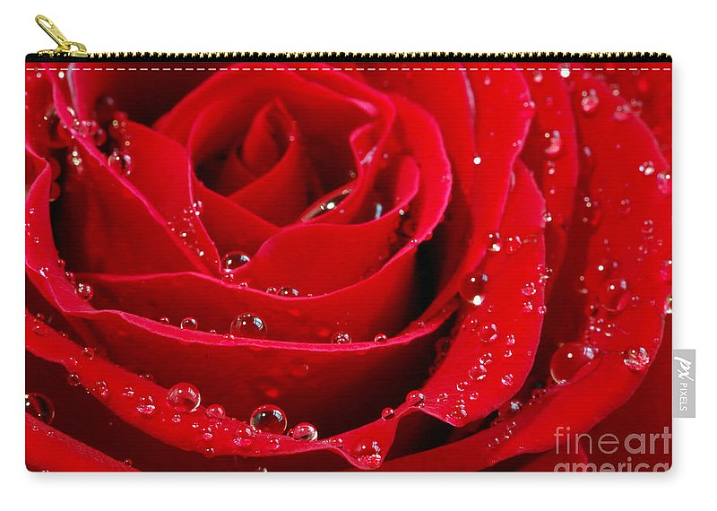 Red Carry-all Pouch featuring the photograph Red Rose by Elena Elisseeva