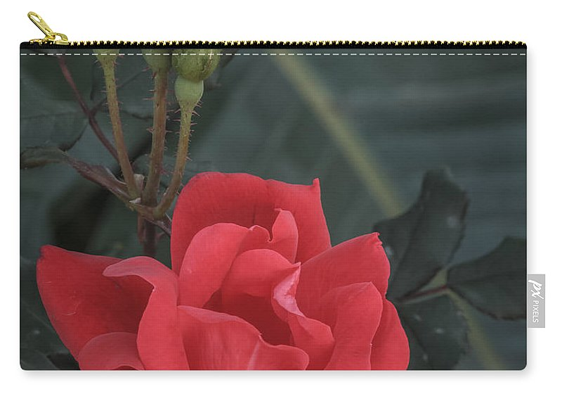 Florida Carry-all Pouch featuring the photograph Red Rose With Bud by Jane Luxton