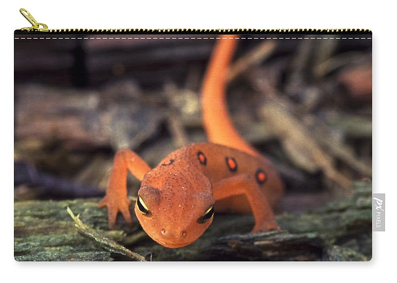 Red Carry-all Pouch featuring the photograph Red Spotted Newt by Richard Kitchen