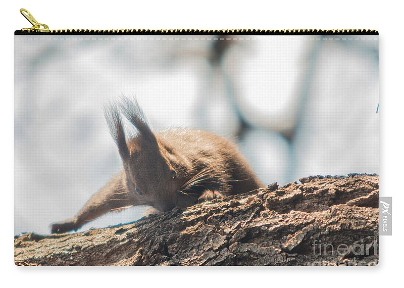 Sciurus Vulgaris Carry-all Pouch featuring the photograph Red Sqirrel by Jivko Nakev