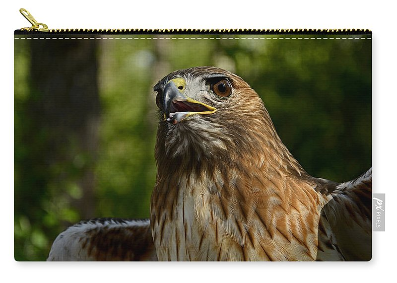 Bird Carry-all Pouch featuring the photograph Red Tailed Hawk by Eric Albright