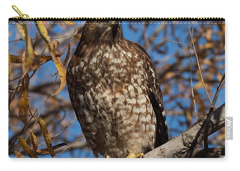 Red-tailed Carry-all Pouch featuring the photograph Red-tailed Hawk In A Willow Tree by Kathleen Bishop