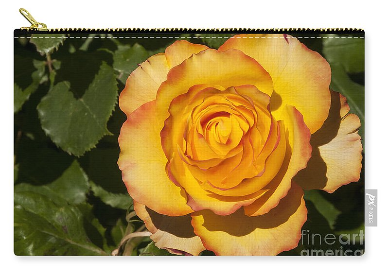 Botanical Gardens Christchurch New Zealand Red-tipped Yellow-orange Rose Roses Leaf Leaves Flower Flowers Bloom Blooms Carry-all Pouch featuring the photograph Red-tipped Yellow-orange Rose by Bob Phillips