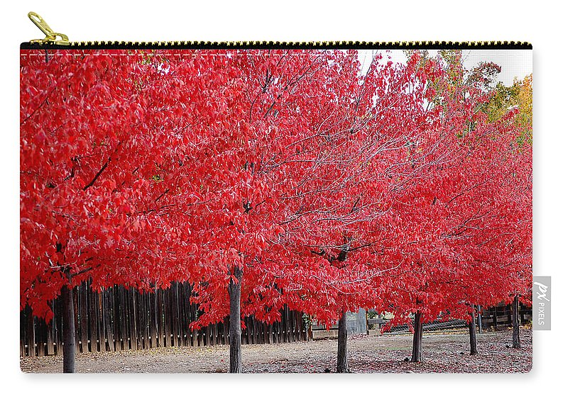Red Leaves Leaf Tree Fall Colors Row Line Chico Ca Carry-all Pouch featuring the photograph Red Tree Line by Holly Blunkall