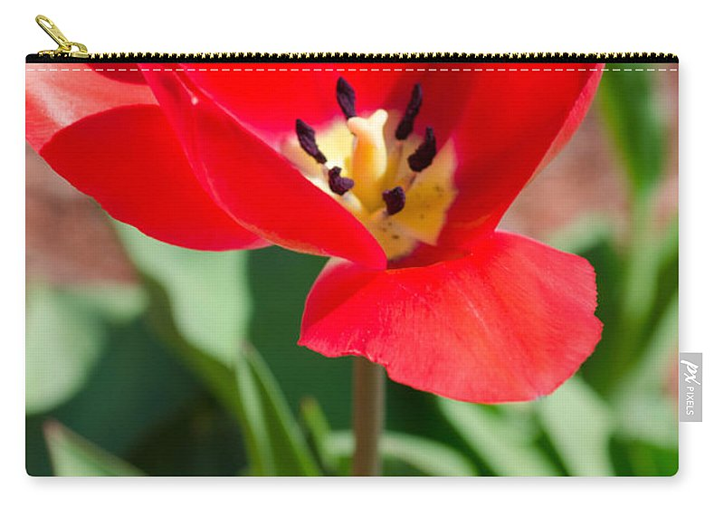 Flower Carry-all Pouch featuring the photograph Red Tulip by Andrea Anderegg