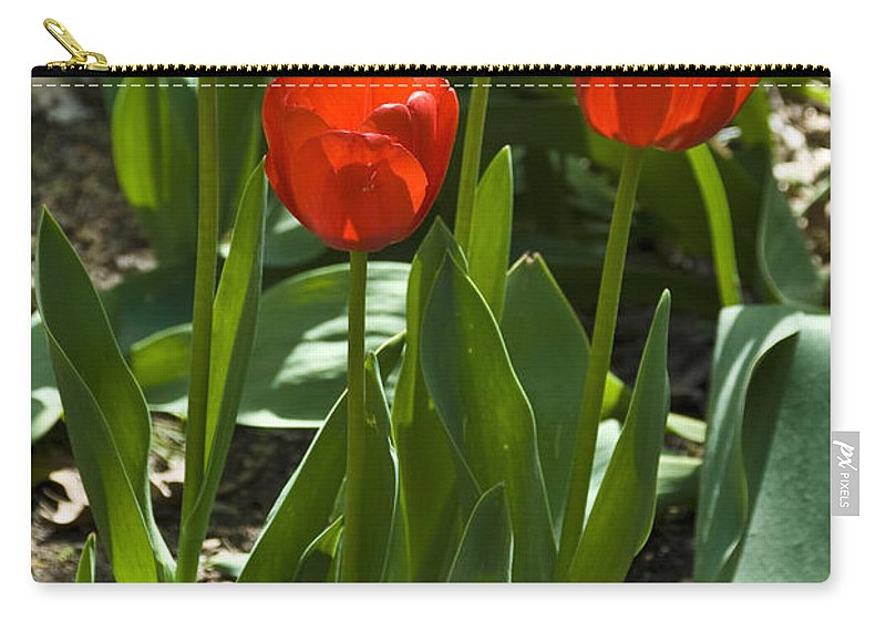 Flower Carry-all Pouch featuring the photograph Red Tulips by Anthony Sacco