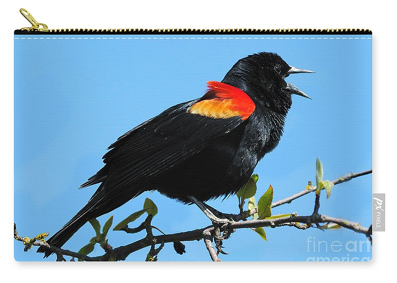 Red Wing Blackbird Carry-all Pouch featuring the photograph Red Wing Blackbird 2 by Vivian Christopher