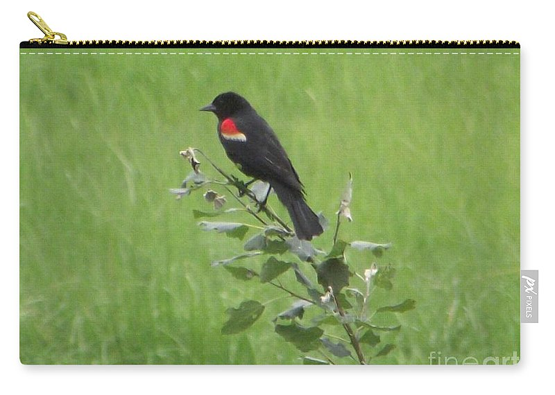 Red Wing Blackbird Carry-all Pouch featuring the photograph Red Wing Blackbird by Michelle Welles