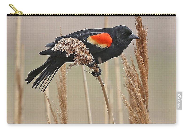 Nature Carry-all Pouch featuring the photograph Red-wing Blackbird by Mike Dickie
