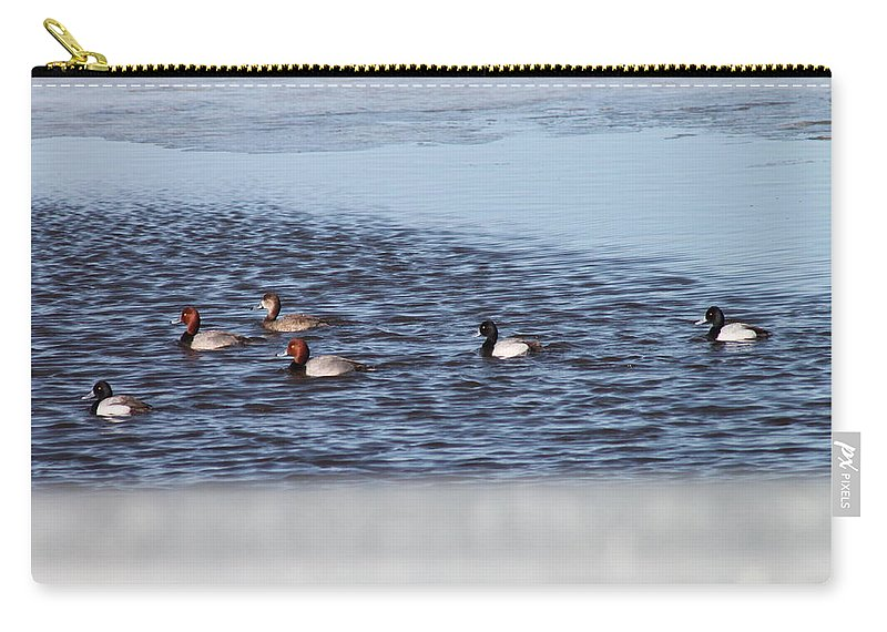 Ducks Carry-all Pouch featuring the photograph Redhead And Scaups Ducks by Wayne Williams