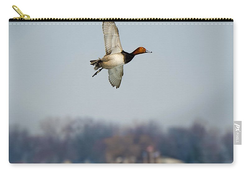 Harsens Island Carry-all Pouch featuring the photograph Redhead Duck Over Harsens Island Michigan by LeeAnn McLaneGoetz McLaneGoetzStudioLLCcom