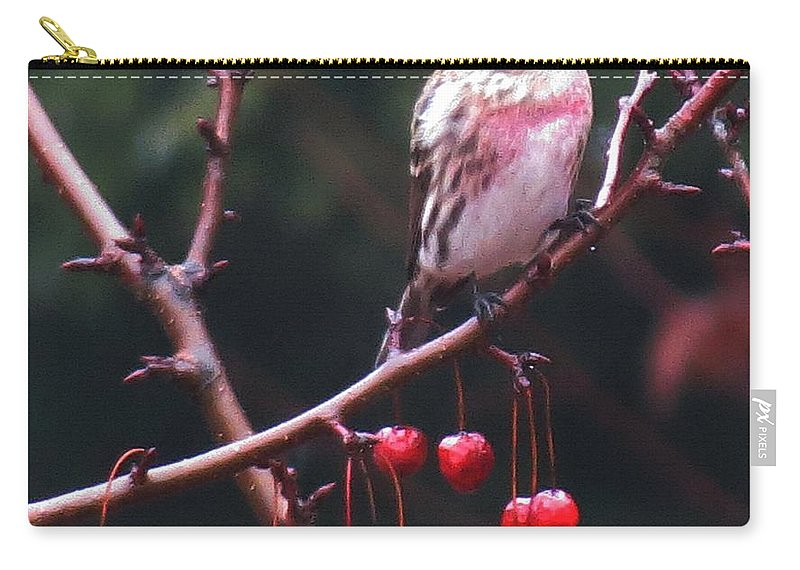 Bird Carry-all Pouch featuring the photograph Redpoll On Crabapple Tree by MTBobbins Photography
