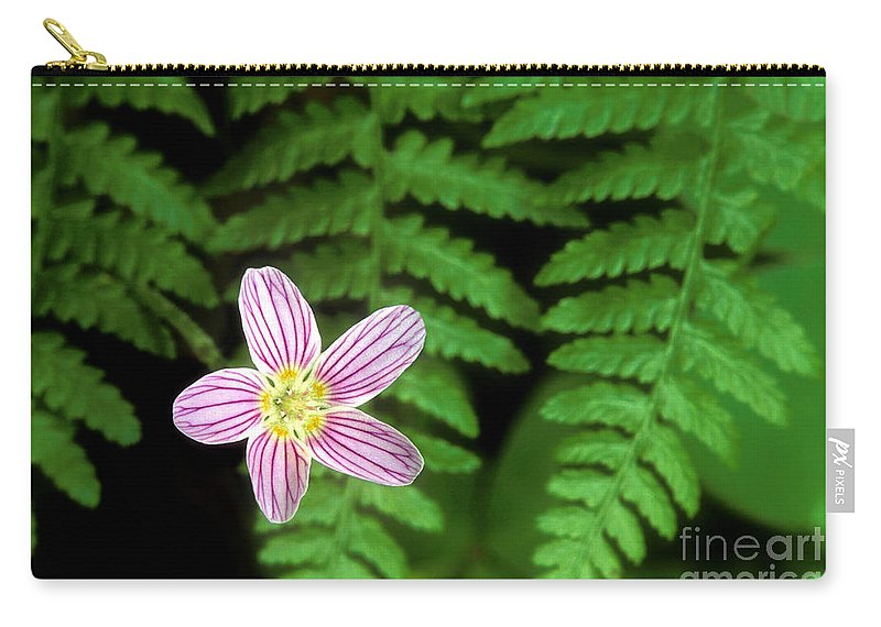 Redwood Sorrel Carry-all Pouch featuring the photograph Redwood Sorrel Wildflower Nestled In Ferns by Dave Welling