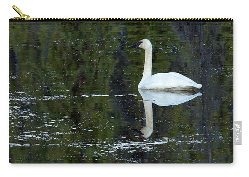 Trumpeter Swan Carry-all Pouch featuring the photograph Reflecting Swan by Thomas Sellberg