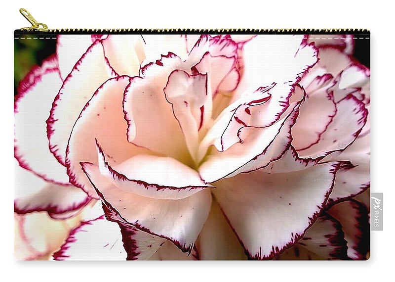Carnation Flower Petal Nature Pettingell Peak Garden Buttonhole Carry-all Pouch featuring the photograph Reincarnation by Guy Pettingell