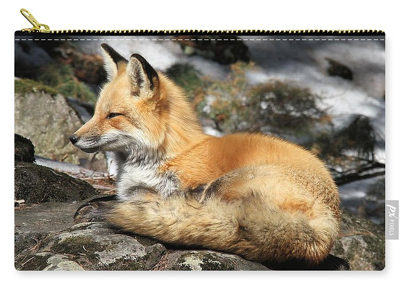 Red Fox Carry-all Pouch featuring the photograph Relaxed by Doris Potter